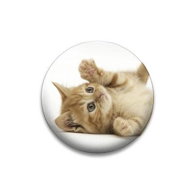 Kotě 4